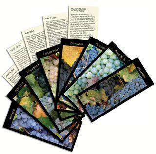 Vinifera-wine-cards-Ghigo-Press