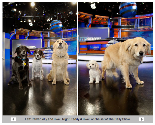 Dogs-of-daily-show